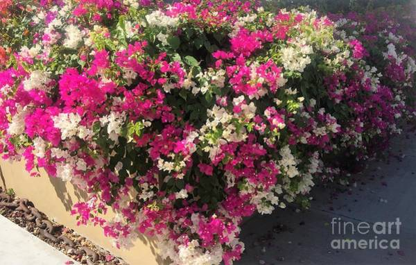 Photograph - Mexico Memories 4 by Victor K