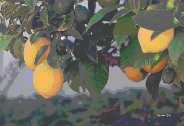 Wall Art - Photograph - Meyer Lemons - Posterized by Suzanne Gaff