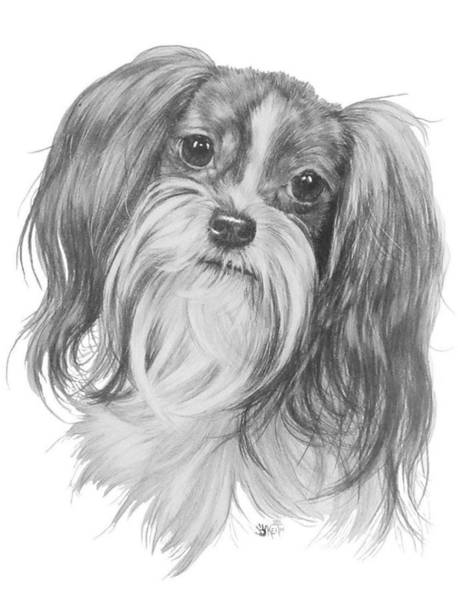 Mutt Drawing - Mi-ki by Barbara Keith