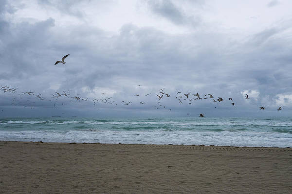 Photograph - Miami Beach Flock Of Birds Flying by Toby McGuire