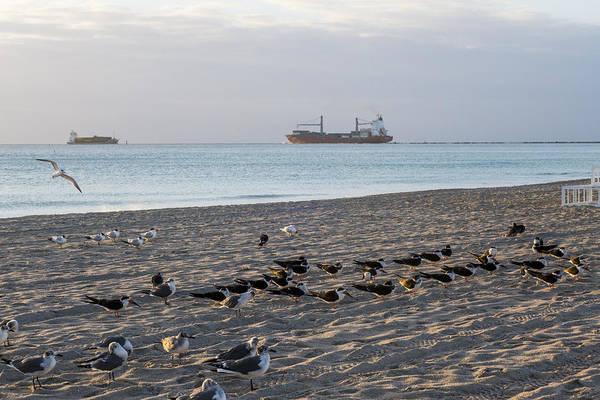 Photograph - Miami Beach Flock Of Birds Sunrise by Toby McGuire