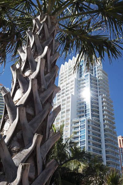 Photograph - Miami Beach Skyscraper Palm Tree by Toby McGuire