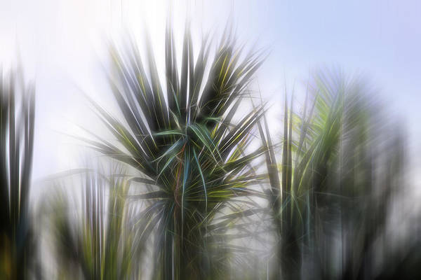 Photograph - Miami Palms by Evie Carrier