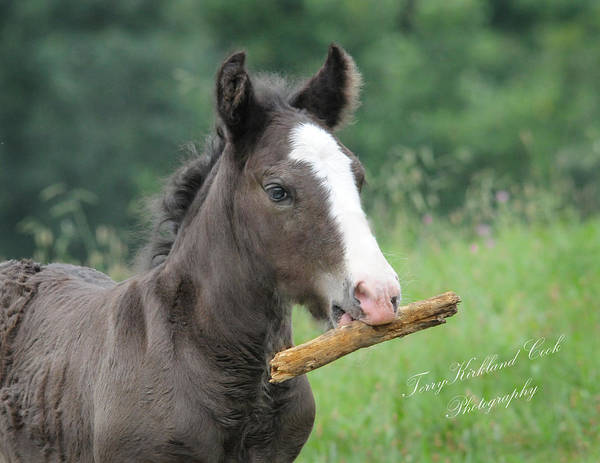 Photograph - Micah And His Stick by Terry Kirkland Cook