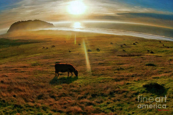 Photograph - Michael's Cow At The Beach by Blake Richards