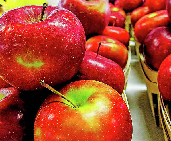 Wall Art - Photograph - Michigan Apples by Winnie Chrzanowski