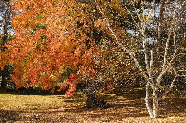 Photograph - Michigan Autumn 1 by Jill Love