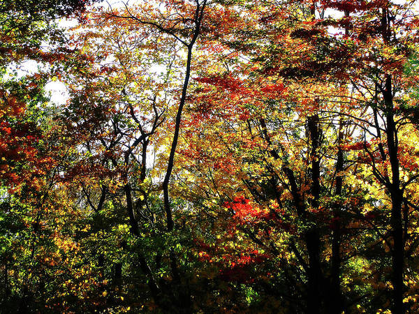 Photograph - Michigan Fall Colors 11 by Scott Hovind