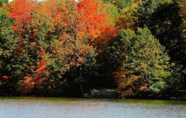 Photograph - Michigan Fall Colors 5  by Scott Hovind