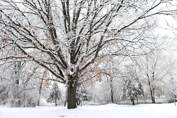 Photograph - Michigan Winter by Scott Hovind