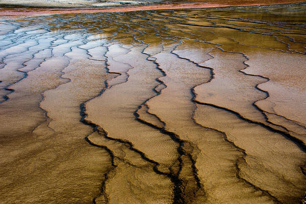 Photograph - Microbial Mat Of The Grand Prismatic Spring by Jennifer Ancker