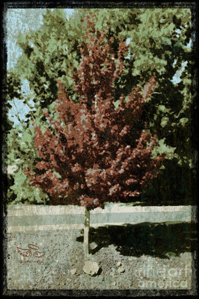 Photograph - Mid Century Tree by Beauty For God