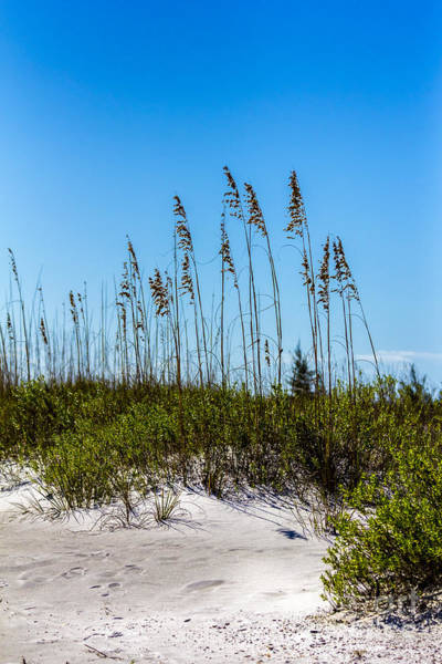 Sandpiper Photograph - Mid Day Dunes by Marvin Spates