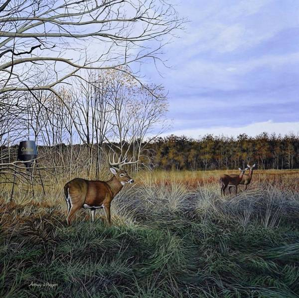Painting - Take Out - Deer by Anthony J Padgett