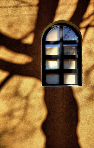 Photograph - Mid Morning Shadow by Cate Franklyn
