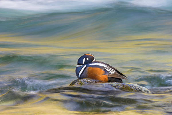 Wall Art - Photograph - Mid Stream by Patrick Endres
