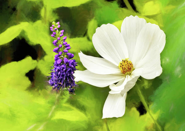 Photograph - Mid-summer Flowers by Kay Brewer