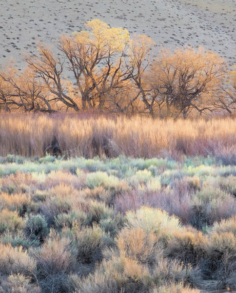 Photograph - Midas Touch When The Grasses Turn Golden In Eastern Sierra Mountains by Usha Peddamatham