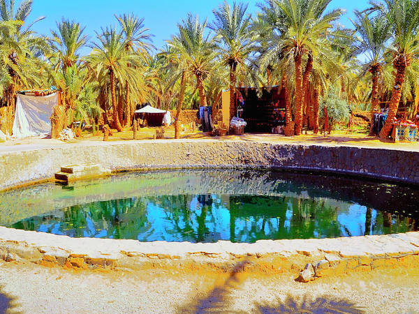 Photograph - Midday At The Oasis by Dominic Piperata