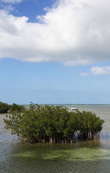 Photograph - Midday Mangroves by Bob Slitzan