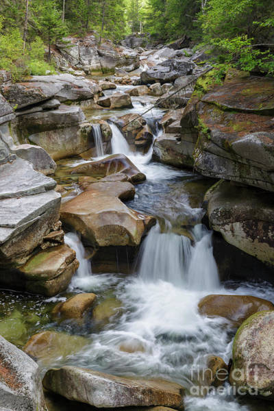 Photograph - Middle Ammonoosuc Falls - Crawfords Purchase, New Hampshire  by Erin Paul Donovan