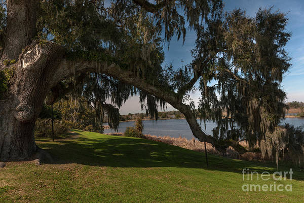 Photograph - Middleton Live Oak Charm by Dale Powell