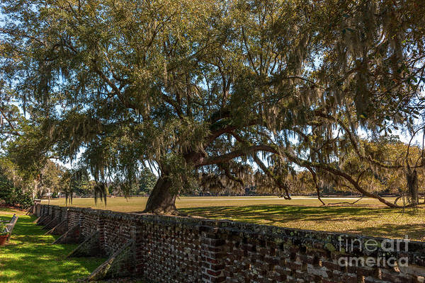 Photograph - Middleton Place Plantation Grounds by Dale Powell