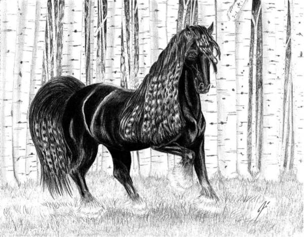 Friesian Drawing - Midnight Beauty by Jose Torres