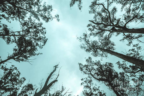 Canopy Photograph - Midnight Canopy by Jorgo Photography - Wall Art Gallery