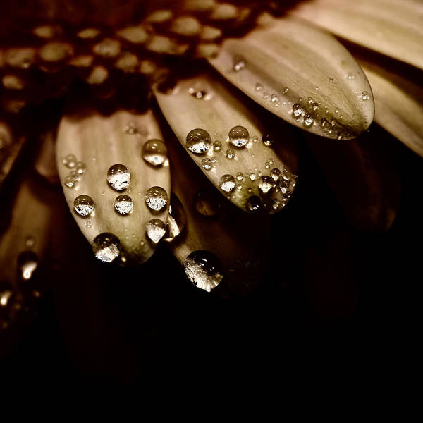 Photograph - Midnight Dewdrops by David Patterson