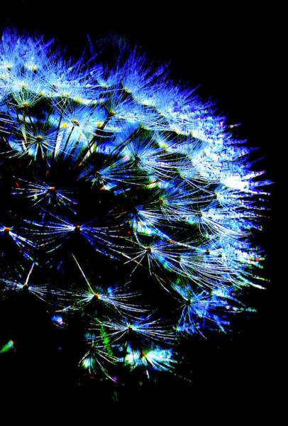 Dandelion Puff Photograph - Midnight Glow by Julie Lueders
