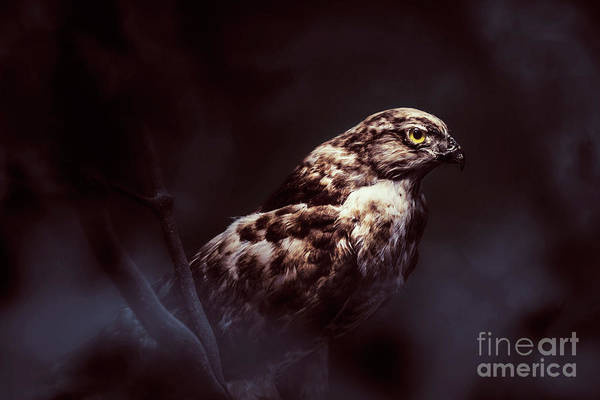Strong Photograph - Midnight Hawk by Jorgo Photography - Wall Art Gallery