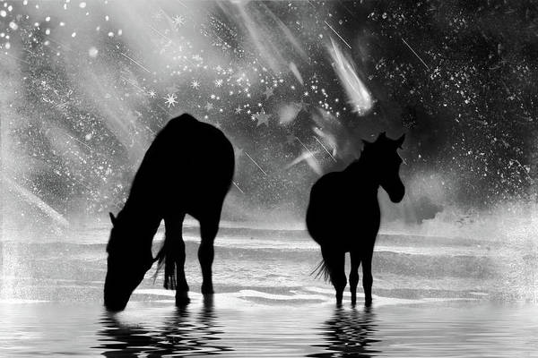 Photograph - Midnight Horses At The Beach Black And White by Peggy Collins