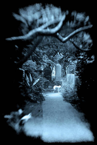 Photograph - Midnight In The Garden O by Jennifer Wright