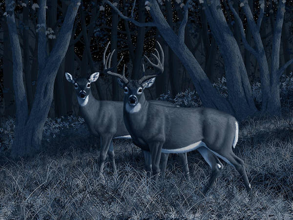 Wall Art - Painting - Midnight Stroll - Whitetail Deer At Night by Crista Forest
