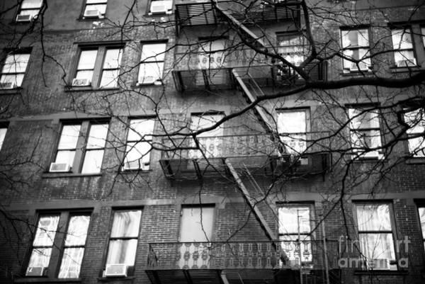 Photograph - Midtown Tree by John Rizzuto