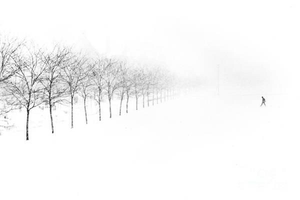 Single Tree Wall Art - Photograph - Midway Plaisance by Jim Wright