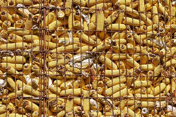 Photograph - Midwest Corn Crib by Polly Castor