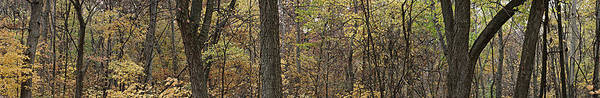 Photograph - Midwest Forest by Robert Harshman