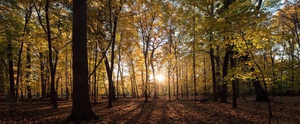 Wall Art - Photograph - Midwest Forest by Steve Gadomski