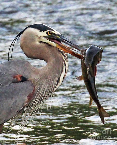 Photograph - Mighty Catch by Jennifer Robin