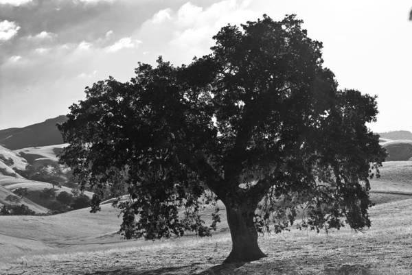 Photograph - Mighty The Oak by Brad Hodges