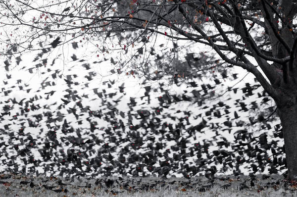 Photograph - Migration Of The Redwings by Susan Maxwell Schmidt