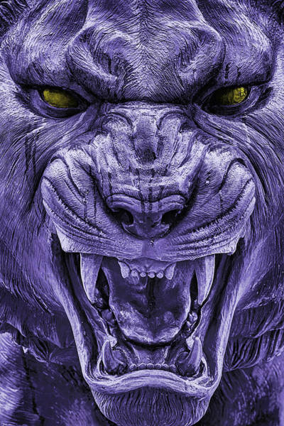 Growling Wall Art - Photograph - Mike In Purple And Gold by JC Findley