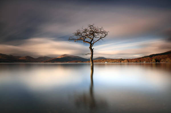 Photograph - Milarrochy Rowan by Grant Glendinning