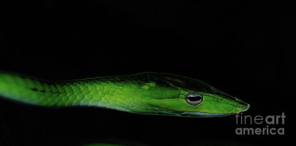 Photograph - Mildly Venomous by Linda Shafer