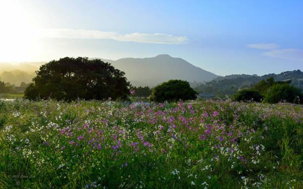 Photograph - Milkmaids Flowers And Mt. Tamalpais by Brian Tada