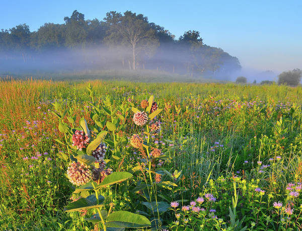 Photograph - Milkweed Morning At Glacial Park's Lost Valley by Ray Mathis