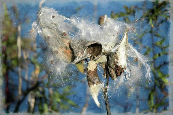 Digital Art - Milkweed Ready To Spread The Seeds. by Rusty R Smith