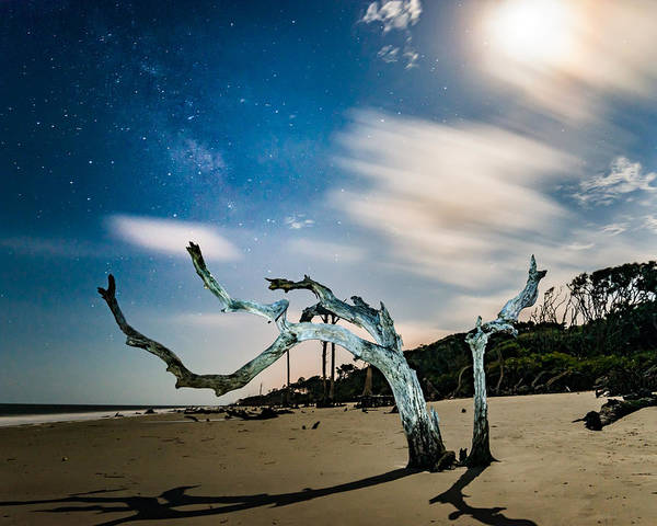 Photograph - Milky Way Above Driftwood Boughs  by Chris Bordeleau